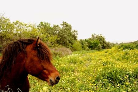 ISA cavalo